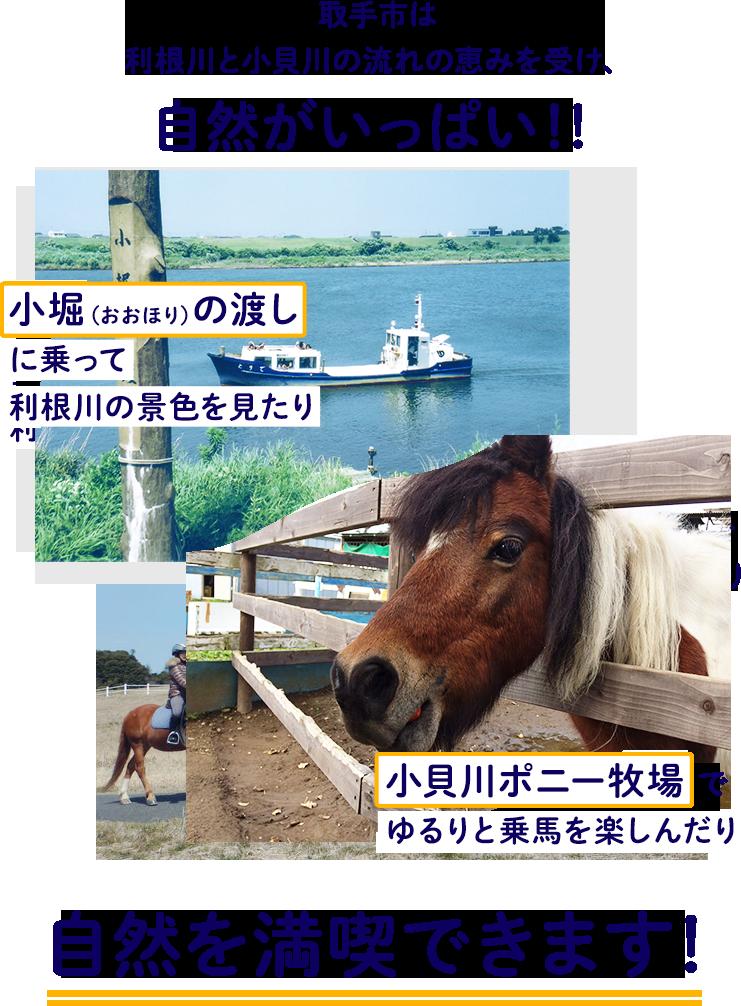 取手市は利根川と小貝川の流れの恵みを受け、自然がいっぱい!!小堀(おおほり)の渡しに乗って利根川の景色を見たり、小貝川ポニー牧場でゆるりと乗馬を楽しんだり、自然を満喫できます!