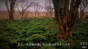 初春のオニグルミの森の野鳥たち