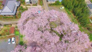 【ドローン 4K】茨城県取手市井野台サクラ公園