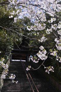 とりでの春景色