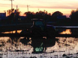 田植えの時期は夕陽と水田のグラデーション